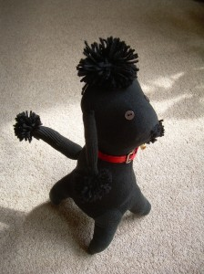 Nutsy the Poodle